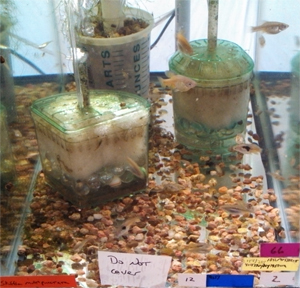 Breeding livebearers for Filtre aquarium rond