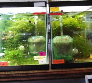 Setting up a fishroom for Filtre aquarium rond